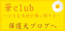 華club